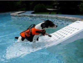 Loopplank hond voor het zwembad